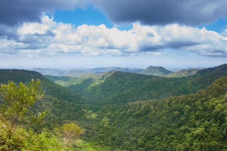 Subtropical rainforest with mountains in Springbrook national park, Australia