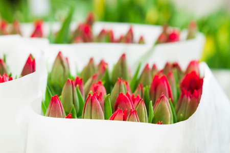 Red tulips on the market in Amsterdam, Netherlands