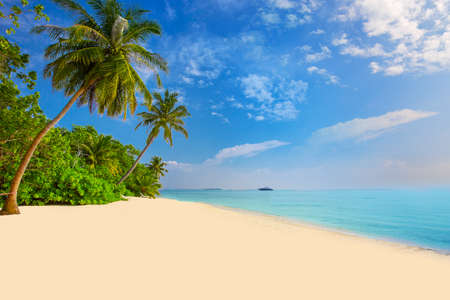 polynesia: Tropical island with sandy beach, palm trees, overwater bungalows and tourquise clear water