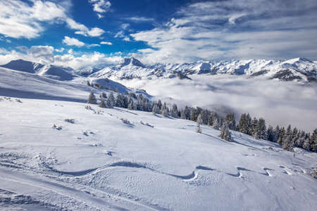 wildkogel austria: Trees covered by fresh snow in Austria Alps from Kitzbuehel ski resort - one of the best ski resort in the workd with 54 cable cars, 170 km prepared skiing slopes and place of famous Hahnenkamm race, Tyrol, Austria