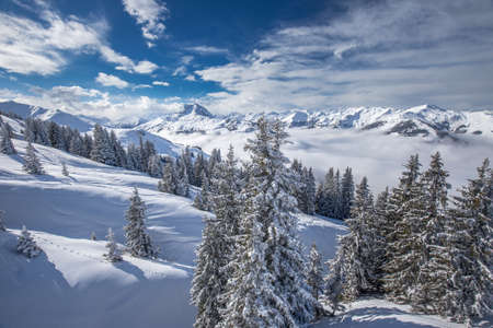 wildkogel austria: Trees covered by fresh snow in Alpine mountains - Austria from Kitzbuehel ski resort - one of the best ski resort in the workd with 54 cable cars, 170 km prepared skiing slopes and place of famous hahnenkamm races, Tyrol, Austria Stock Photo