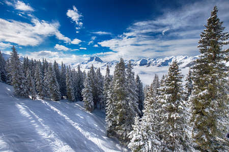 wildkogel austria: Trees covered by fresh snow in Austria Alps from Kitzbuehel ski resort - one of the best ski resort in the workd with 54 cable cars, 170 km prepared skiing slopes and place of famous hahnenkamm races, Tyrol, Austria Stock Photo