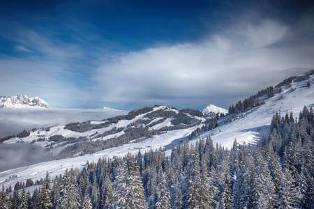 wildkogel austria: Trees covered by fresh snow in Austria Alps from Kitzbuehel ski resort - one of the best ski resort in the workd with 54 cable cars, 170 km prepared skiing slopes and place of famous hahnenkamm races.