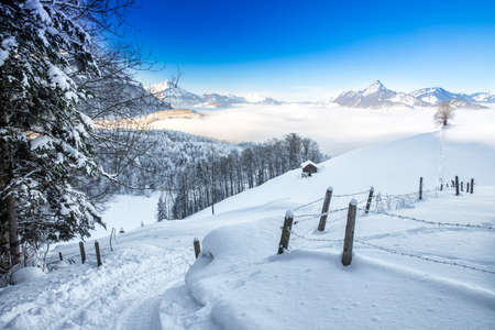 wildkogel austria: Trees covered by fresh snow in Alps with stunning winter landscape.