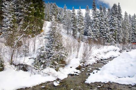 wildkogel austria: White trees covered by fresh snow in Alps, postcard winter landscape.
