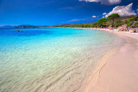 CORSICA, FRANCE - August 2016 - Palombaggia sandy beach with pine trees and azure clear water, Corsica, France, Europe.