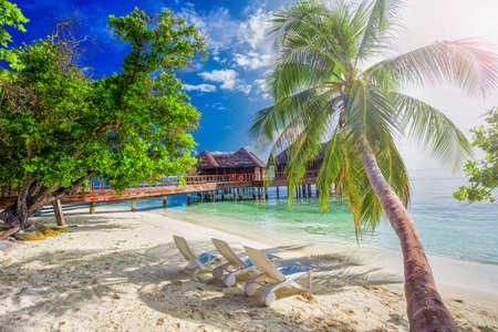 ターコイズ モルディブを水と水上バンガローをはっきりと熱帯の島のヤシの木 写真素材