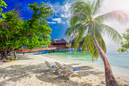 Palm tree on tropical island with turquoise clear water and overwater bungalow, Maldives