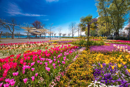 Flowers (tulips, Palms) in the centre of Konstanz city park with Constance lake (Bodensee) in the background. Konstanz is a university city located at the western end of Lake Constance in the south-west corner of Germany, Switzerland