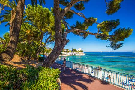 ヤシの木、松の木と紺碧の清流、コート アズ ボーリュ ・ シュル ・ メール村のビーチ プロムナード フランス、ヨーロッパのフランスのリビエラ。