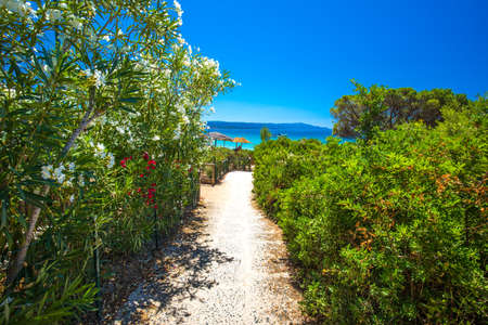 Flowers on Spiaggia delle Bombarde beach near Alghero, Sardinia, Italy.