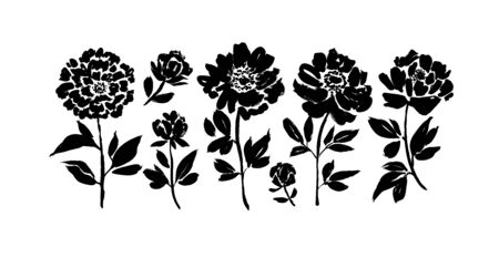 Peony and anemones hand drawn paint vector set. Ink drawing flowers and plants, monochrome artistic botanical illustration. Isolated floral elements, hand drawn illustration. Brush strokes silhouette.