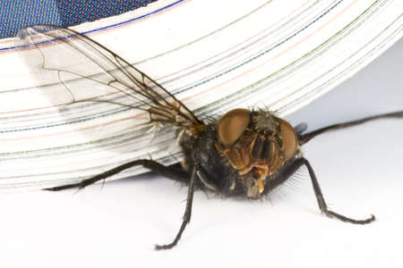 compound eye: house fly killed by magazine in extreme close up Stock Photo