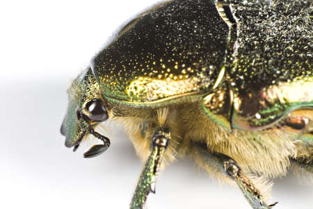 iridescent bug in close up from side on light background Stock Photo - 10079373
