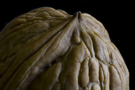 Walnut in low key picture in close up Stock Photo - 10079539
