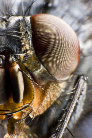 focus on compound eye. extreme macro with aggressive look Stock Photo