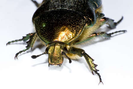 opalescent: colorful bug (insect) in extreme close up Stock Photo