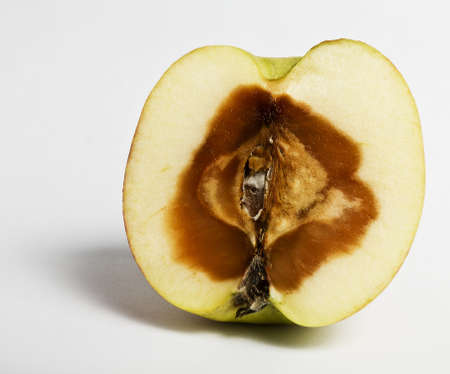 stinky apple devided. rotten from the inside