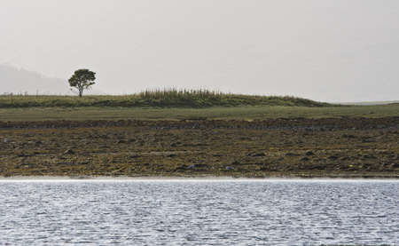 no way out: coastline with single tree in scotland Stock Photo