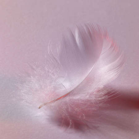 filamentous: studio photography of a white fluffy down feather in grey back