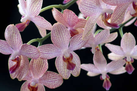 agleam: floral background with lots of colorful orchid flowers in black back Stock Photo