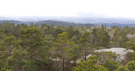 forested: forested landscape in south norway with rock on right side