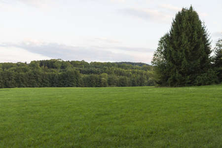 west of germany: landscape with green grassland in south west germany