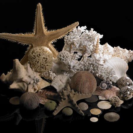 goniopora: marine decoration in dark back