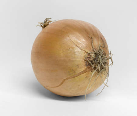 single onion on desk in light grey back Stock Photo - 16692769