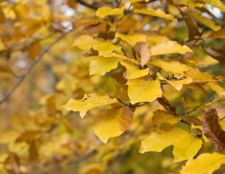 momentariness: natural brown autumn leaves and twigs in blurry back