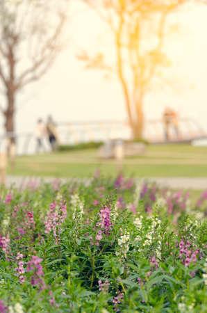 Pflanzen Löwenzahn fühlen, Jahrgang Blume, Portrait Blume entspannen