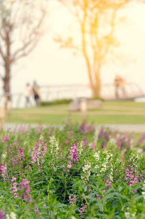 plants dandelions feel relax,vintage flower,portrait flower
