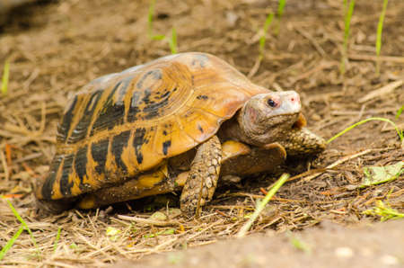 carapace: Turtle life clamber slowly find food