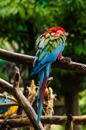 Colorful macaws standing on log Stock Photo