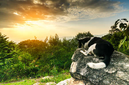 epic: Dog looking at epic view from top mountain,landscape
