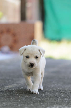Puppy observe Stock Photo