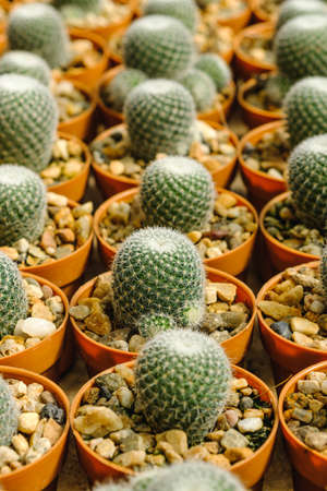 Cactus in pot and background