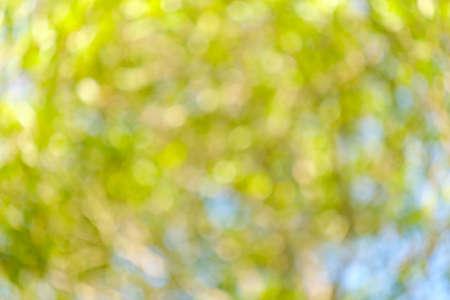 Bokeh of light nature,blured background,de focus.Sunlight shining through the leaves of trees.Abstract nature background, Nature green bokeh.