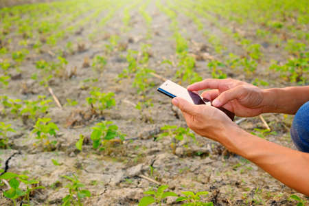 farmer using mobile checking report of soybeans in farm with copy space