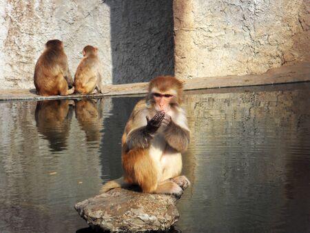 palmistry: Palmistry monkey
