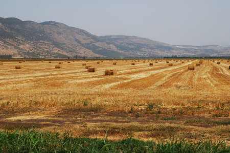 Mown hay on the field against the backdrop of the mountains photo