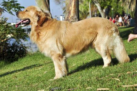 Beautiful dog on green lawn in the Yarkon PARK photo