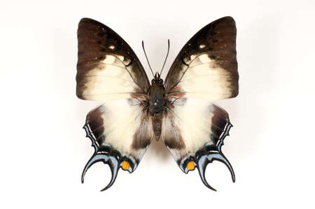 Dried unfolding of a butterfly on a white background Imagens