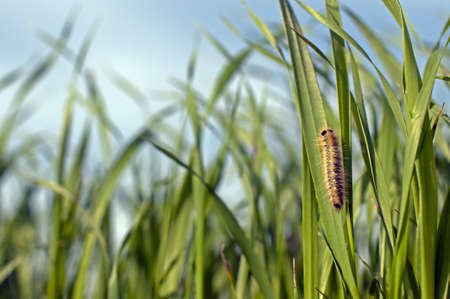 caterpillar on the grass against the sky Stock Photo - 8951809