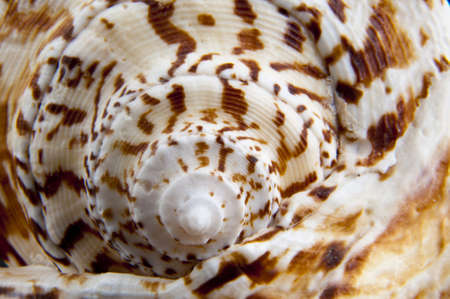 shell texture for your background