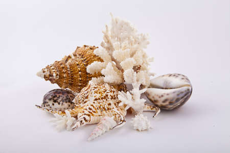 shells and coral on white background