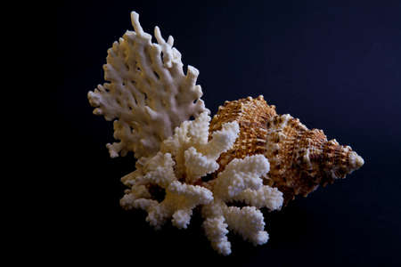 shells and coral on a black background