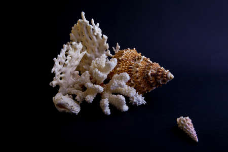 shells and coral on a black background Stock Photo - 9059950