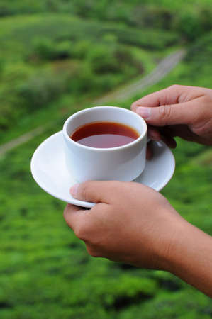 A hand holding a cup of tea on tea farm background Stock Photo - 8706337