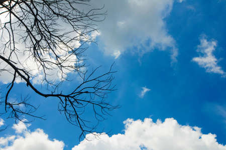 silhouette Old Tree Branch With Blue Sky Cloudy Background